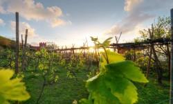 Vini Biodinamici